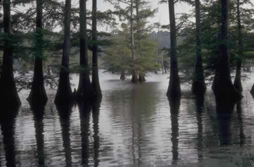 The beauty and solitude of the Louisiana swamp