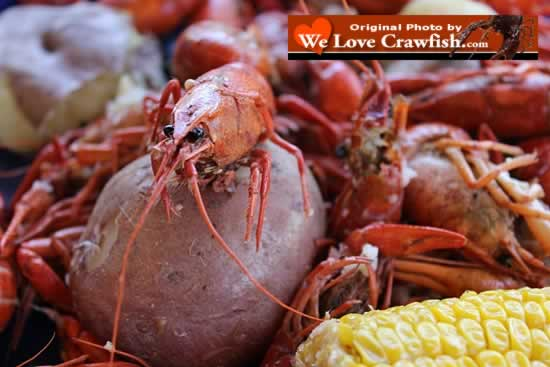 WeLoveCrawfish.com ... photos, crawfish season, Cajun foods, ordering and much more!