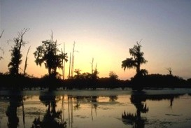 Louisiana Swamp: Duck hunting paradise