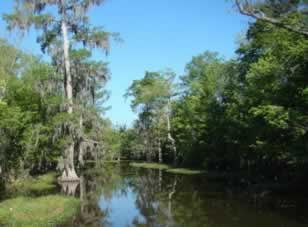Louisiana Swamp near Pierre Part, Louisiana, filming location for the History Channel's Swamp People