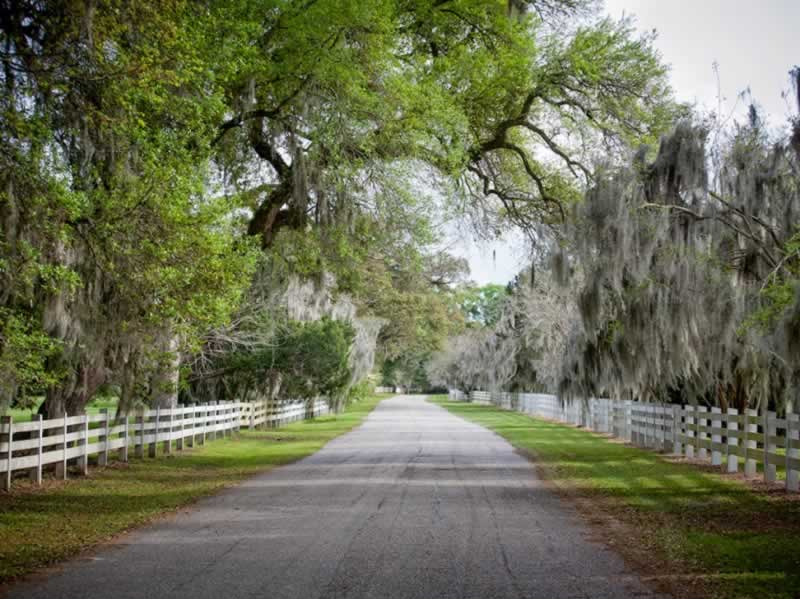 Spanish Moss on a quiet back road in Acadiana in South Louisiana